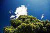 ID 3023176 | Niebieskie niebo i zielone liście | Foto stockowe wysokiej rozdzielczości | KLIPARTO