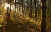 ID 3023446 | Sonnenaufgang im Wald | Foto mit hoher Auflösung | CLIPARTO