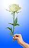 ID 3019805 | Белая роза в мужской руке | Фото большого размера | CLIPARTO