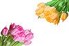 Viele bunte Tulpen | Stock Foto