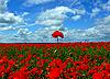 Rote Mohnblumen | Stock Photo