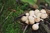 ID 3022752 | Trujące grzyby | Foto stockowe wysokiej rozdzielczości | KLIPARTO
