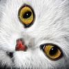 猫的眼睛 | 免版税照片