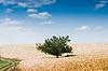 Piękna krajobrazu wiejskiego z drzewa | Stock Foto