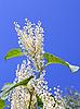 ID 3038765 | Roślina o białych kwiatach | Foto stockowe wysokiej rozdzielczości | KLIPARTO