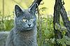 ID 3064842 | Graue Katze im Freien | Foto mit hoher Auflösung | CLIPARTO