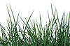 ID 3066950 | Zielona trawa | Foto stockowe wysokiej rozdzielczości | KLIPARTO