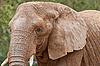 코끼리의 초상화 | Stock Foto