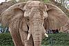 大象的肖像 | 免版税照片