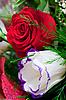 ID 3039380 | Белая и красная розы | Фото большого размера | CLIPARTO