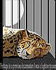 Gepard im Käfig