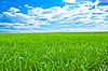 Schönes Feld mit grünem Gras | Stock Foto