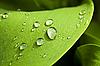 Zielony liść z kroplami wody | Stock Foto