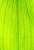 Zielony liść | Stock Foto