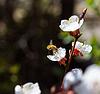 ID 3237114 | Insekt sammelt den Nektar | Foto mit hoher Auflösung | CLIPARTO