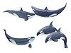 Reihe von Comic-Killerwale zeigen