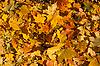秋天的树叶 | 免版税照片