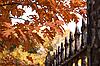 秋 | 免版税照片