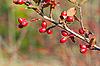 秋天的浆果 | 免版税照片