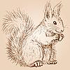 Vektor Cliparts: Eichhörnchen
