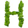 Buchstabe H der grünen Blätter Alphabet
