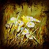 ID 3054273 | Retro Style Nature Background | Foto stockowe wysokiej rozdzielczości | KLIPARTO