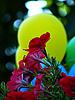 Blumen und gelbe Luftballons | Stock Foto