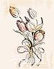 Skizze von Tulpen