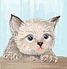 蓬松小猫的蓝眼睛 | 向量插图