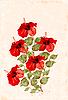 Czerwony hibiskus | Stock Vector Graphics