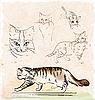 Vektor Cliparts: Vintage Set skizzieren Katzen