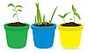 junge Pflanzen in Töpfen