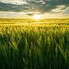 场和太阳 | 免版税照片