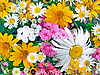 ID 3049423 | Blumen | Foto mit hoher Auflösung | CLIPARTO