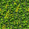 ID 3049583 | Nahtloses Wald-Muster | Foto mit hoher Auflösung | CLIPARTO