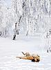 ID 3117849 | Собака играет в снегу. | Фото большого размера | CLIPARTO