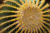 ID 3060239 | Thai cactus in park Nong Nuch | Foto stockowe wysokiej rozdzielczości | KLIPARTO