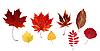 ID 3066329 | Herbstliche Blätter | Foto mit hoher Auflösung | CLIPARTO