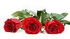 Trzy czerwone róże | Stock Foto