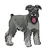 Zwergschnauzer Hund mit hängender Zunge | Stock Vektrografik