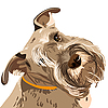 ID 3060114 | Zwergschnauzer Hund | Stock Vektorgrafik | CLIPARTO
