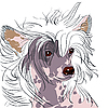 Pies rasy grzywacz chiński | Stock Vector Graphics