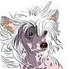 Hund Rasse Chinese Crested | Stock Vektrografik