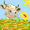 funny cow chewing flower