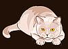 Kurzhaar lila Katze sitzt im Hinterhalt