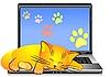 Katze schläft auf der Tastatur des Laptops