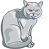 graue Katze sitzt und schaut ernst