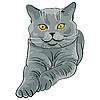 Kot kot leży i wygląda | Stock Vector Graphics
