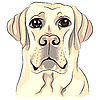 Biały pies rasy labrador retriever | Stock Vector Graphics