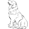 Pies siedzi rasa Nowa Fundlandia | Stock Vector Graphics